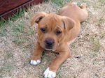 Puppy Murphy