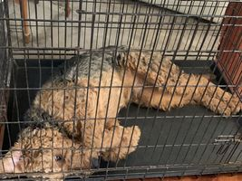 Crating Your Dog