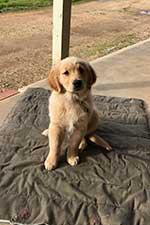 Puppy/Juvenile