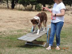 Obstacle/Walking Classes