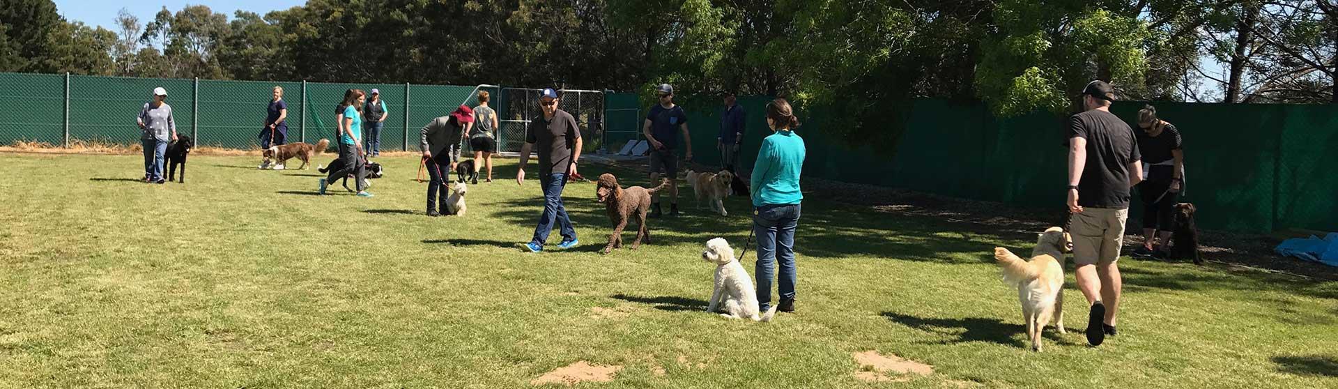 PROFESSIONAL DOG TRAINING